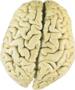 Cervello-sano
